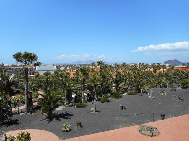 Garden - Oasis Royal, Corralejo, Fuerteventura
