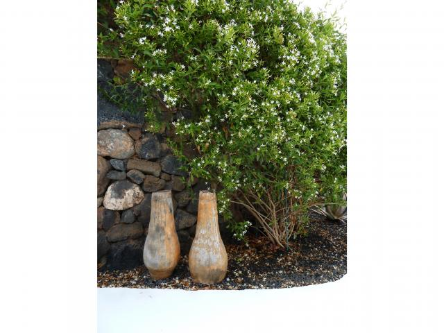 garden detail - Casa Brujas, Lajares, Fuerteventura